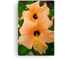 peach hibiscus_2 Canvas Print