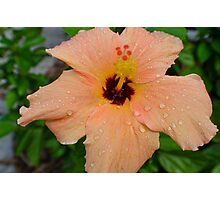 Peach Hibiscus_1 Photographic Print