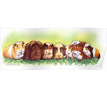 7 Good Luck Guinea Pigs Poster