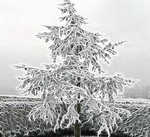Oh, Christmas Tree by lisa1970