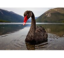 The Black Swan Photographic Print