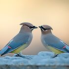 Cedar Waxwings by Bonnie T.  Barry