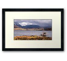 Lone tree at Loch Assynt, Assynt, Scotland Framed Print