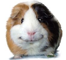 Keep Smiling with Angeelo the Guinea Pig! by fany