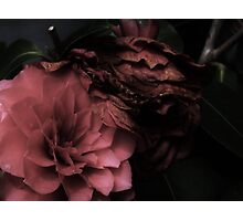 Dark Rosa Photographic Print