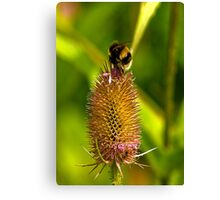 Foraging Bee Canvas Print