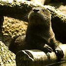 Otter by G. Patrick Colvin