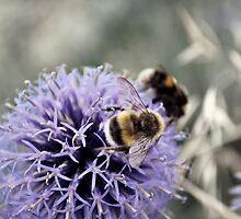 Bumble Bees by artyamie