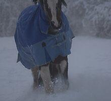 Snow glourious Snow by David Ford Honeybeez photo