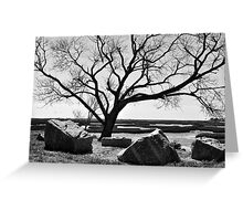 Tree On Marsh Greeting Card