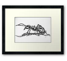 Army Ant Framed Print
