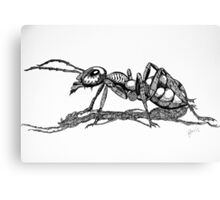 Army Ant Canvas Print