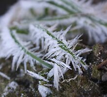 Frost Crystals by Andy Green