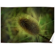 Natures wonder Poster