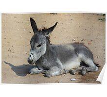 The Littlest Donkey Poster