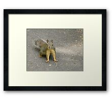 A Cheeky Challenge Framed Print