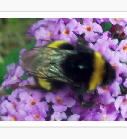 Bumble bee on Buddleigha Sticker