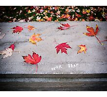 Dear Dear (Autumn Leaves) Photographic Print