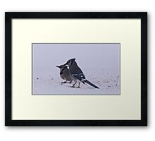Two Blue Jays Framed Print