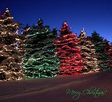 Tis the Season by ThePhotoMaestro