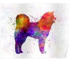 Akita Inu 01 in watercolor Poster