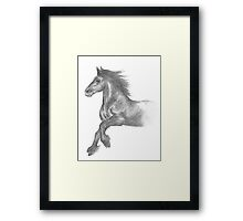 Fell pony cantering Framed Print