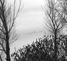 Canada Geese on Christmas Eve by Jessica Dzupina