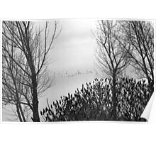 Canada Geese on Christmas Eve Poster