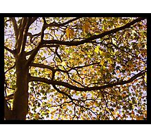 An autumn tree Photographic Print