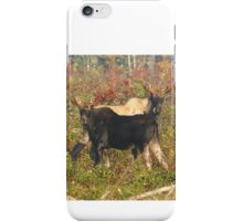 Maine Bull Moose iPhone Case/Skin