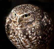 Grumpy by Sue  Cullumber