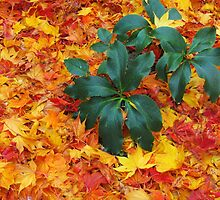 leaves covered garden by ANNABEL   S. ALENTON