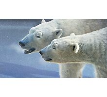 brothers on ice polar bears Photographic Print