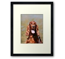 Irish Setter II Framed Print