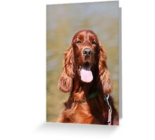 Irish Setter II Greeting Card
