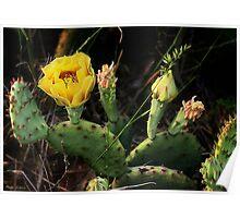 Wild Cactus/ Illinois Poster