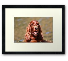 Irish Setter III Framed Print