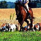 Fox Hunt in Gurnee, IL by dandefensor
