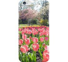 Pink Tulips in the park iPhone Case/Skin