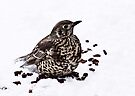 Mistle thrush by inkedsandra