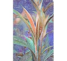 Lavender Unfurling Photographic Print