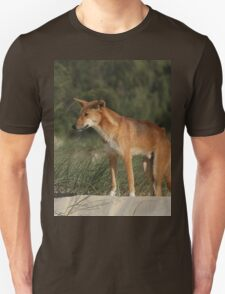 Beautiful Dingo T-Shirt