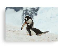 Penguin cuddles Canvas Print