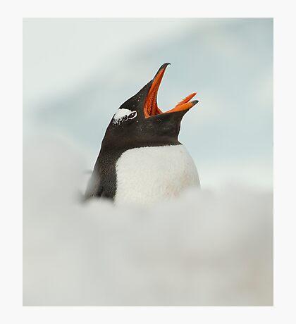 Penguin yawn Photographic Print