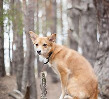 Dog on a tree. Pine forest. by bashta