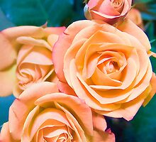 Peach Roses by Joy  Rector