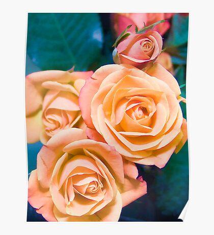 Peach Roses Poster