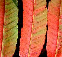 three autumn signs by yvesrossetti