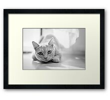 The pouncing kitty - BW Framed Print