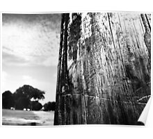 trees in distance  Poster